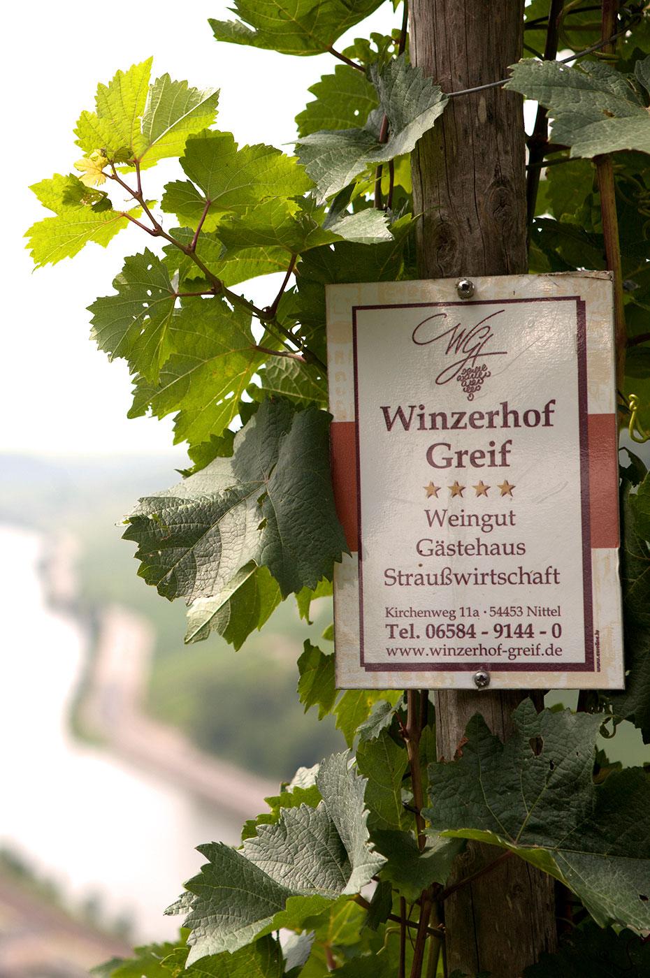 Winzerhof Greif Rebe